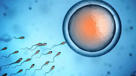 Дослідження конкурентної здатності сперми