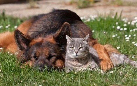Заведіть собі собаку або кота і настрій одразу поповзе вгору!