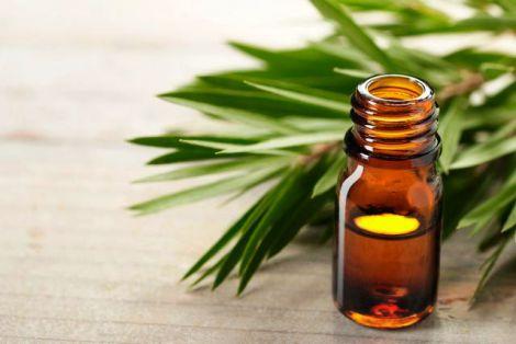 В яких випадках не можна застосовувати олію чайного дерева?