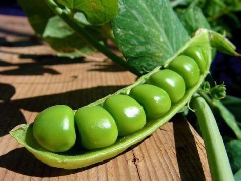 Смачний та корисний зелений горошок