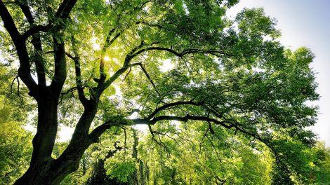 Дерева врятують від спеки