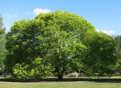 Дерева рятують від депресії
