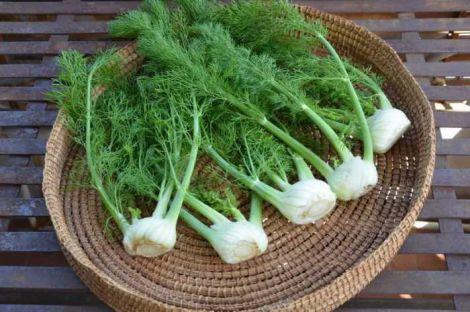 Настій насіння фенхелю для очистки кишечника