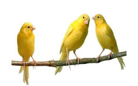 птахи лікують депресію