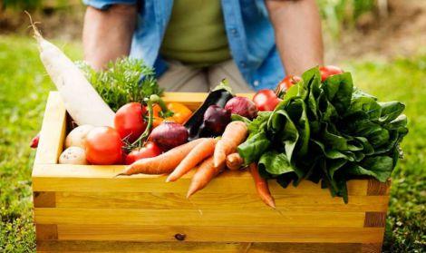 Домашнее выращивание продуктов