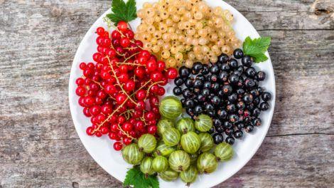 Червону смородину можуть їсти не усі