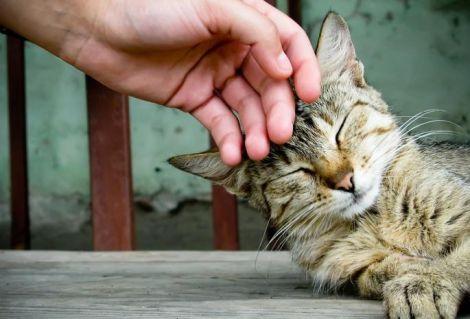 Небезпечна хвороба, якою можна заразитись від кота