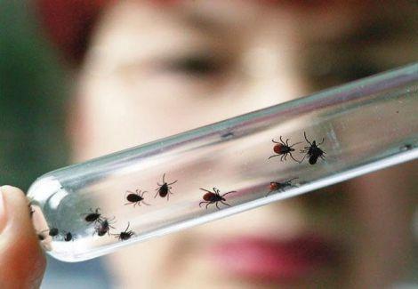 Від малярії помер чоловік у Львові