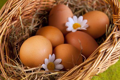 Чому корисно вживати курячі яйця?