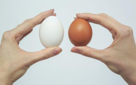 Шкідливі яйця