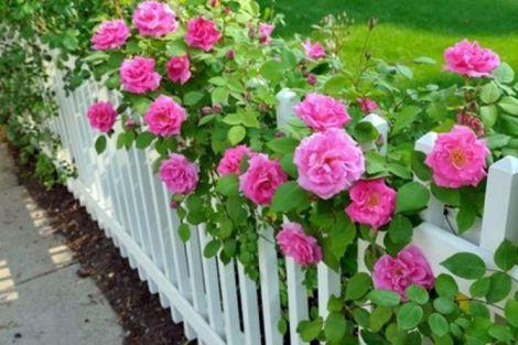 Троянди для нормалізації сну