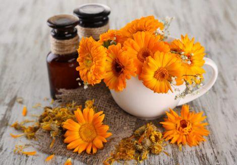 Їстівні квіти, які корисні для лікування