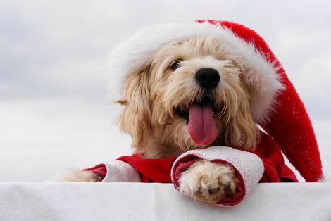 Як привабити щастя у Новому році?