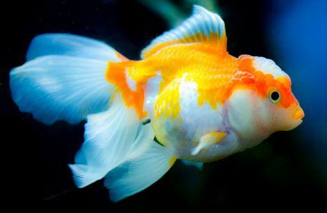 Антибіотики для рибок