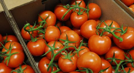 Небезпечні турецькі томати