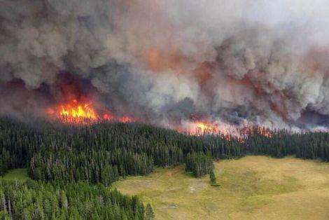 Лісові пожежі та здоров'я