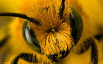 перша допомога при бджолиному укусі
