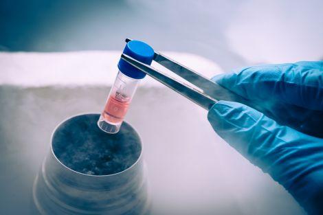 Науковці рекомендують жінкам заморожувати яйцеклітини