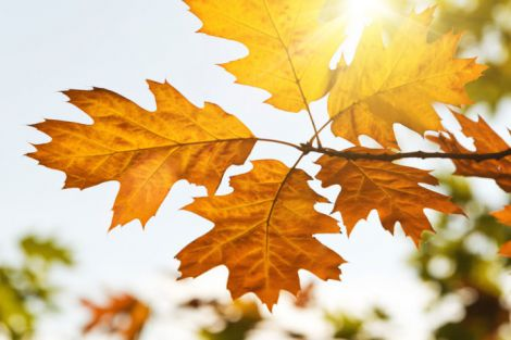Різке потепління у листопаді