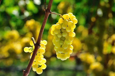 Кому краще не вживати виноград?