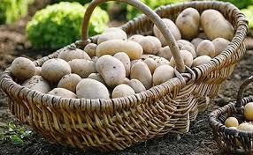 Картопля позбавить набряків