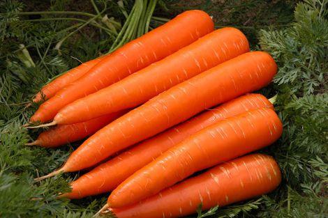 Морква від раку
