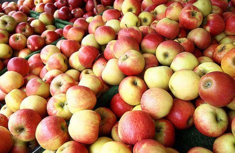 Яблука - хрусткі і корисні плоди