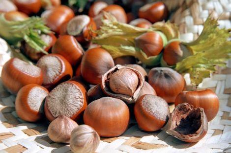 Лісові горіхи корисні для діабетиків