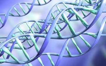 Відкриття вже назвали проривом у генетиці, який допоможе людям наблизитися до розгадки зародження жи