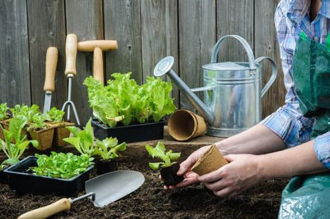 Робота в саду