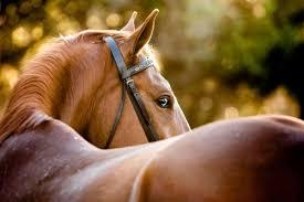 ТОП - 3 тварини, які позитивно впливають на здоров'я людини