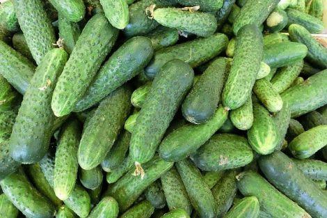 Лікар розповів, що станеться з організмом, якщо з'їдати по два огірка кожен день