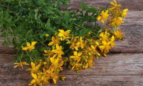Деякі рослини підвищують артеріальний тиск