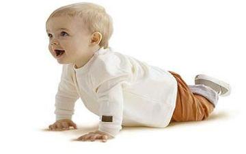 Вилочкову залозу часто називають залозою дитинства або залозою зростання