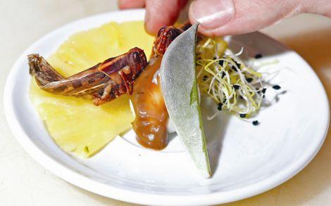 Вчені рекомендують їсти комах