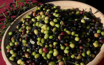 Оливки корисні для кісток
