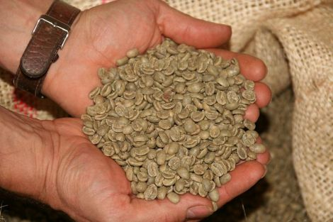 Як приготувати напій з зеленої кави, що спалює жир