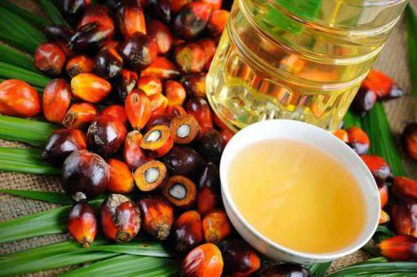 Користь пальмової олії