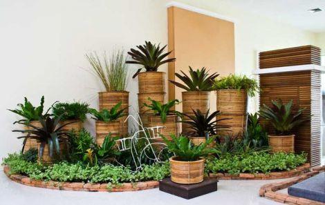 Домашні рослини, що очищують повітря