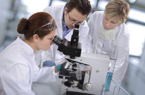 Вчені розповіли про асиметрію організмів
