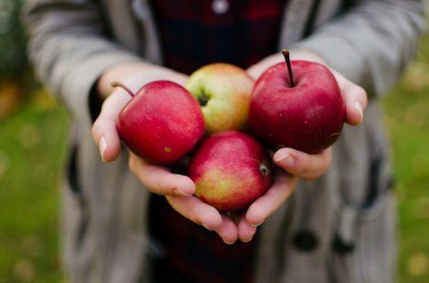 Правильне вживання яблук