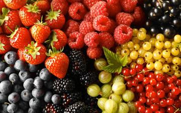 ягоди здатні призупинити старіння мозку