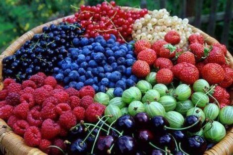 Замість вітамінів - ягоди!