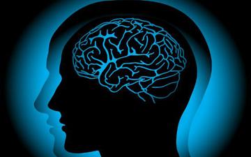 як працює мозок людини в різні вікові періоди