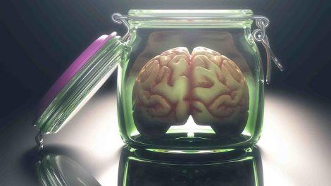 Мозок у лабораторії ожив