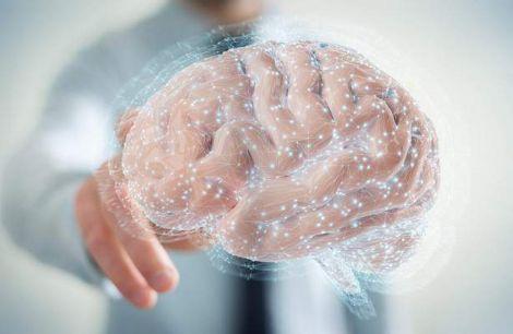 Великий мозок - не запорука хорошої пам'яті