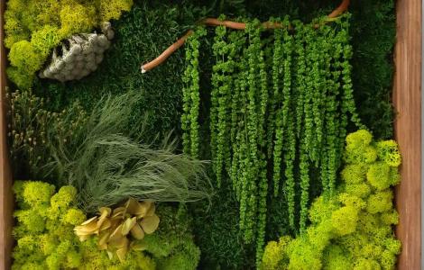 Як правильно прикрасити свій дім чи офіс живими рослинами
