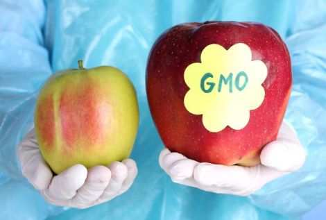 ГМО в продуктах харчування