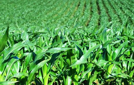 Чому від фермерства залежить здоров'я українців