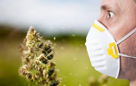 Міфи про алергію на пилок, які заважають вам жити
